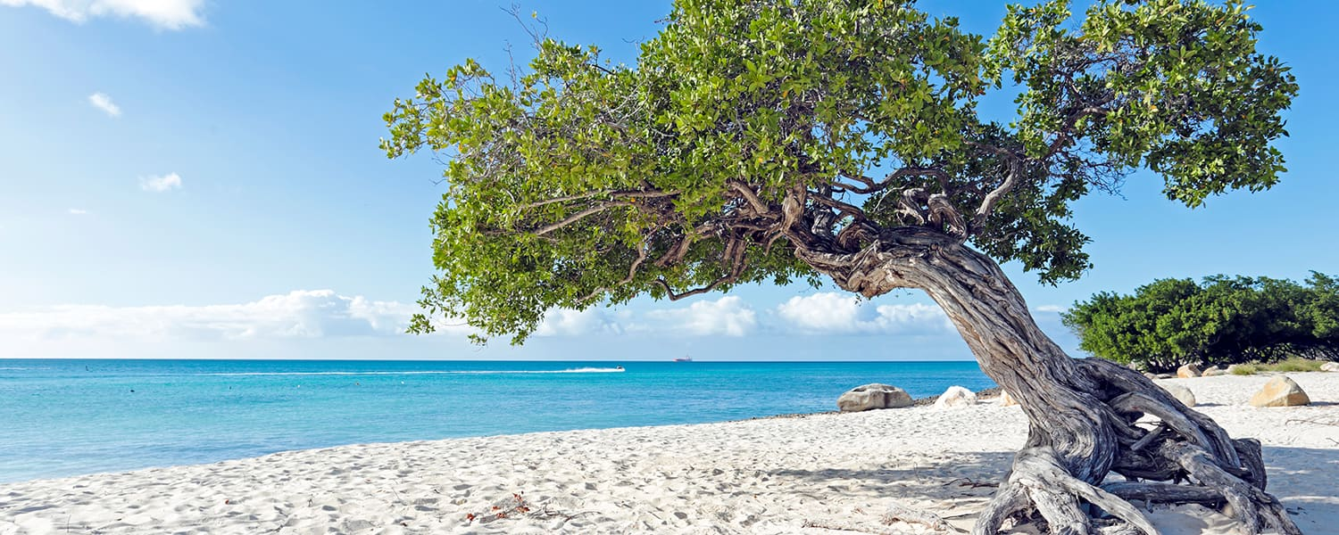 Find flights from Brazil to Aruba from USD 419*