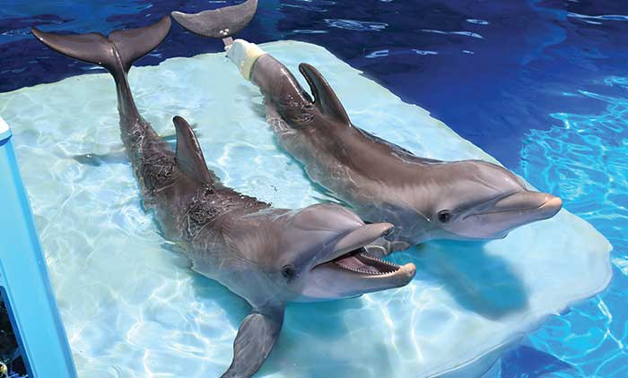 Clearwater Aquarium, Tampa