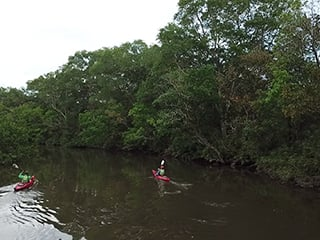 kayak in a mangrove