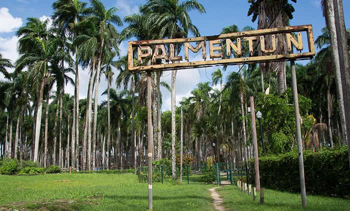 Jardín de las Palmas
